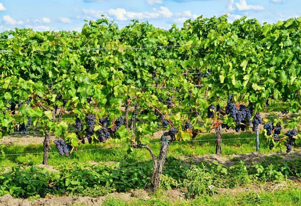 Appellation de vin Bourgogne