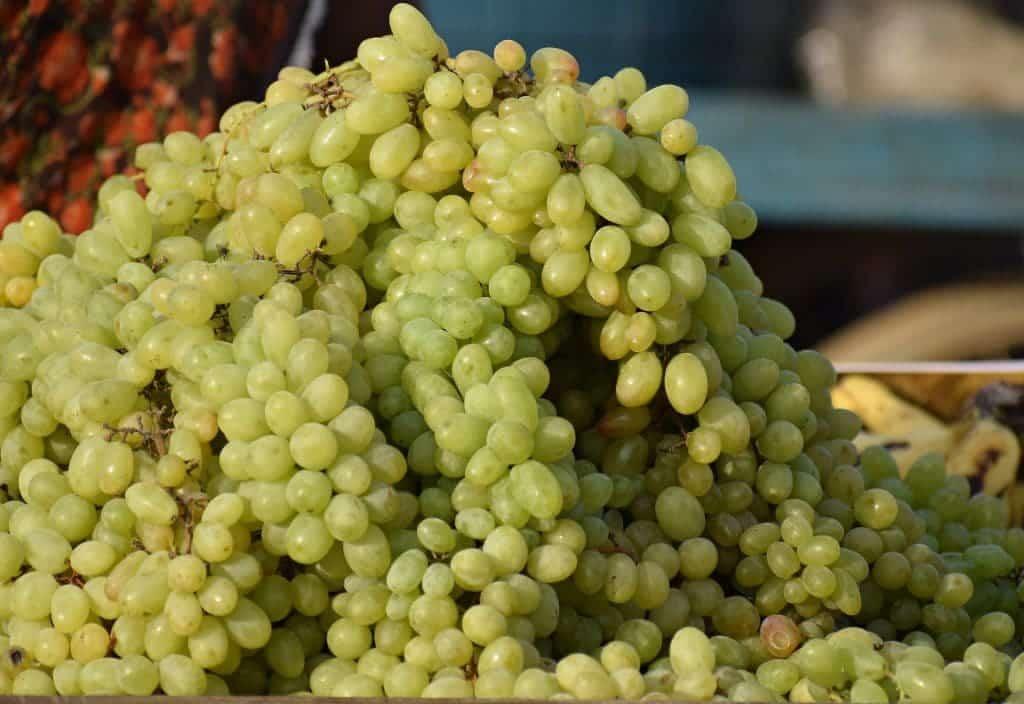 Cépages vignes Rhônes