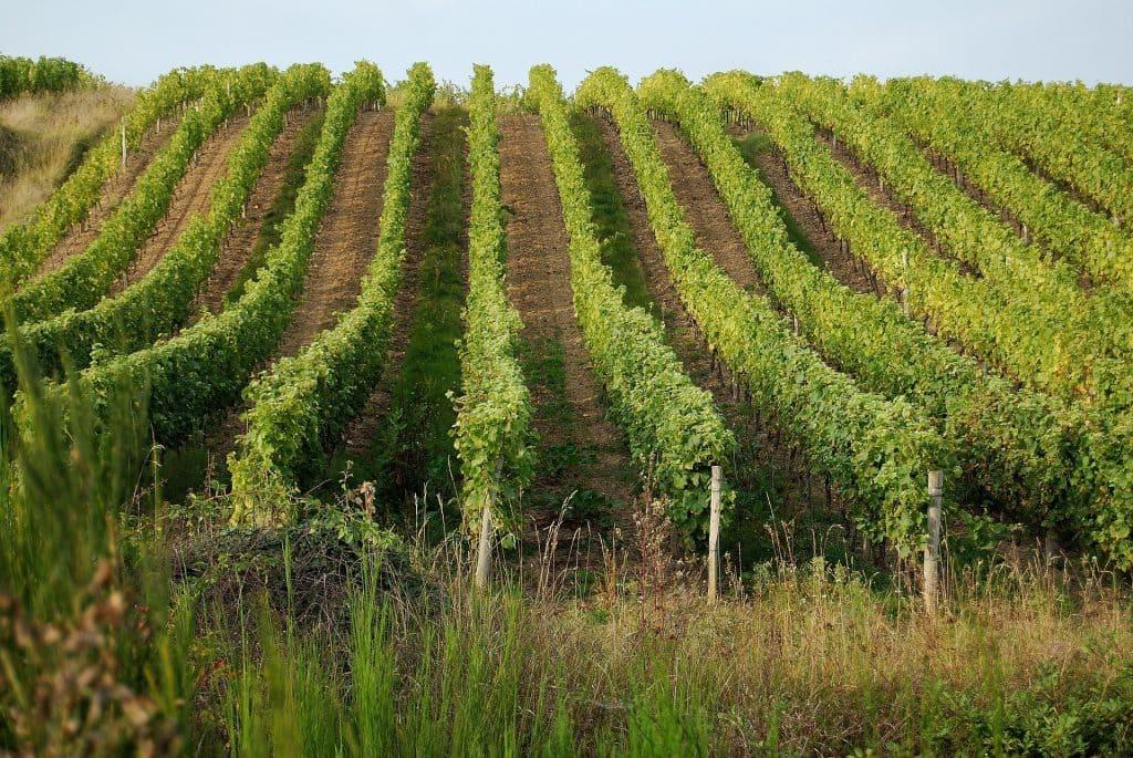 Vignoble de Val de Loire