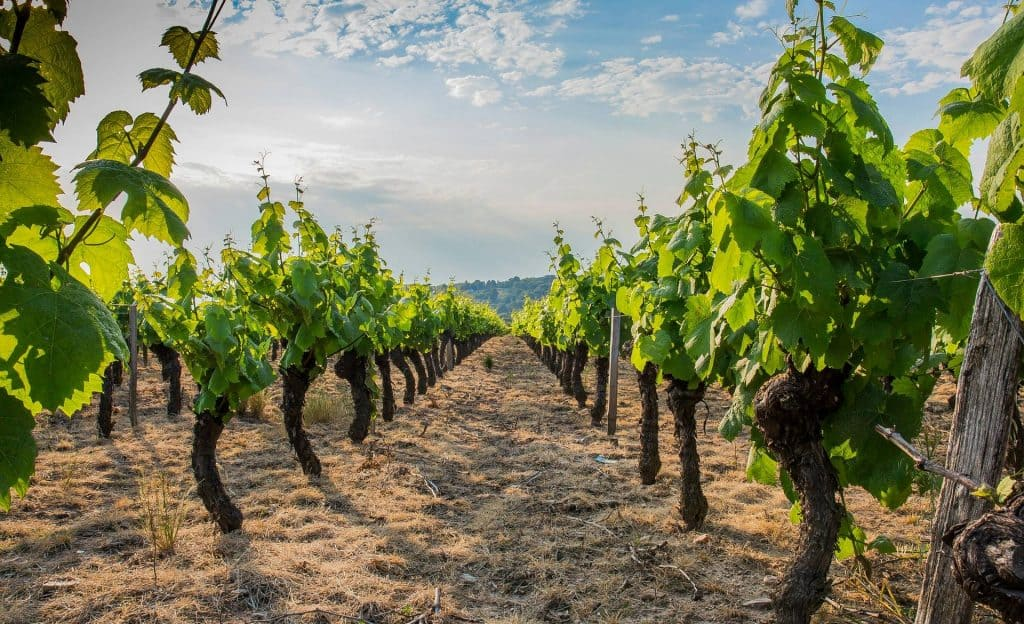 Vignoble du Beaujolais